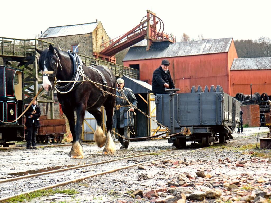 Horse Shunting 1