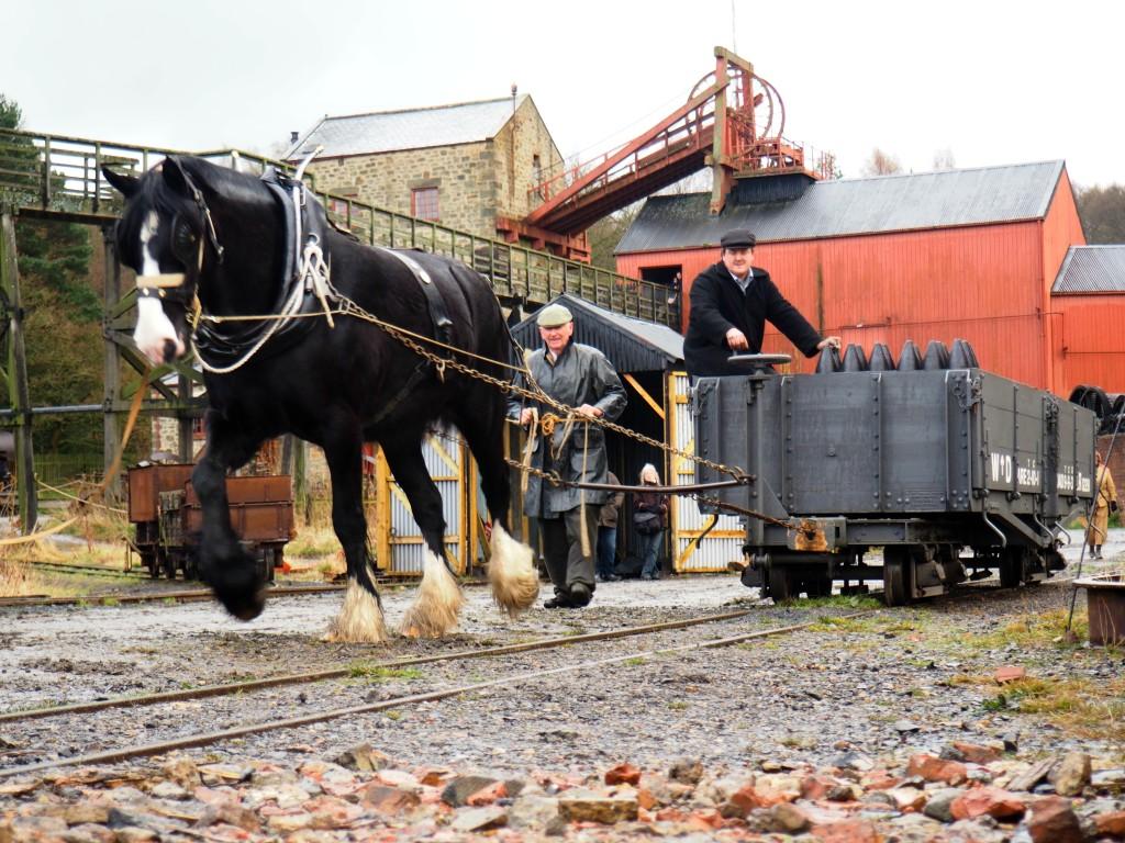 Horse Shunting 3