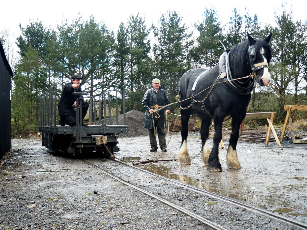 Horse Shunting 4